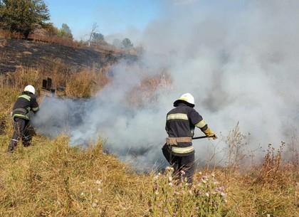 Под Харьковом спасли лес от пожара (ГСЧС)