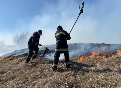 Поджог сухой травы: ответственность может стать уголовной (ВИДЕО)