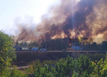 ФОТО: Спасатели едва отстояли жилые дома от подожжённого пироманами камыша на Жихоре - комментарии р