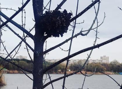 Пожар под Журавлевским мостом: в Сети разместили фото погибших животных (ВИДЕО, ФОТО 18+)