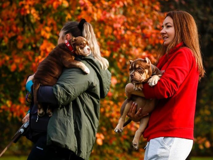 Ветеринары призвали соблюдать дистанцию между собаками