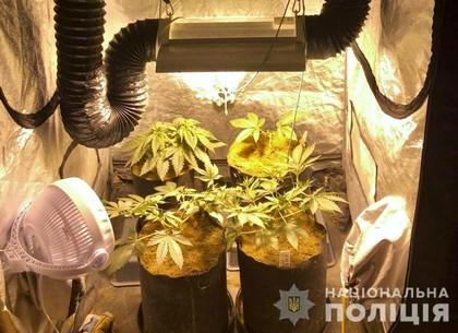 Харьковчанин обустроил наркотеплицу в квартире (ФОТО)