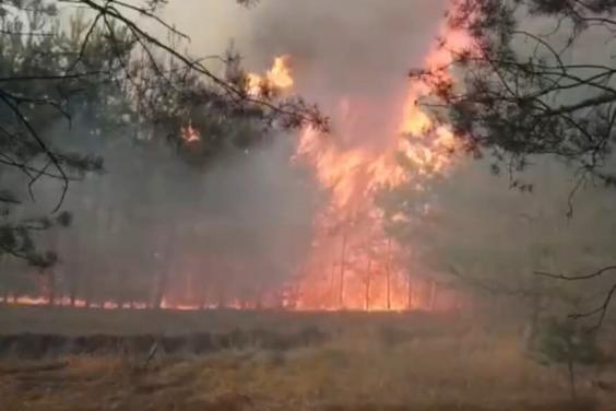 С начала года в области произошло 30 лесных пожаров