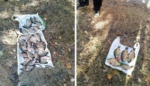 В сетях браконьера нашли краснокнижную рыбу (Рыбнадзор)