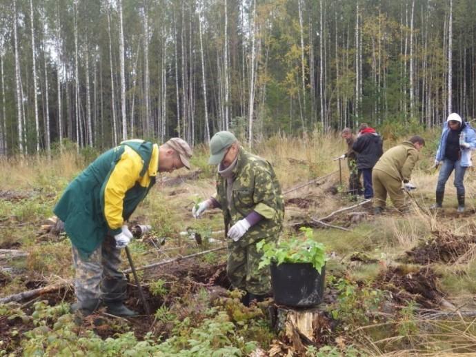 20 сентября - День работников леса