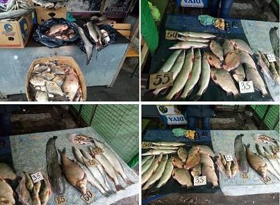 На ХТЗ торговали рыбой неизвестного происхождения – Рыбнадзор