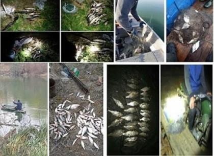Сколько убытков нанесли браконьеры, посчитали в рыбоохранном патруле (Рыбнадзор)
