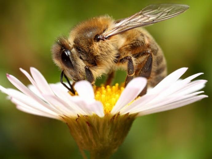 20 мая- Всемирный день пчел