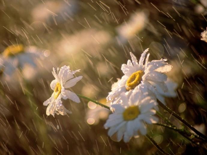 Погода на 21 апреля: в Украине будет прохладно, на востоке пройдут дожди