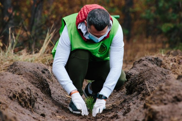 На Харьковщине за день высадили 40 тысяч деревьев