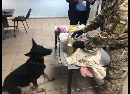 Таможенники Слобожанщины изъяли за три месяца 32 кг наркотиков